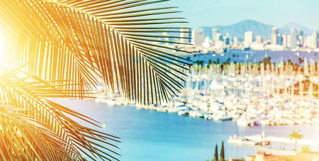 palm tree leaves with city background